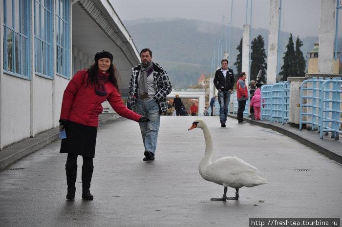 ... и до крытого моста на Курортный остров — совсем недалеко. По пути в грязелечебницу можно кормить лебедей и даже поближе познакомиться.