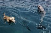 Купание с дельфинами.