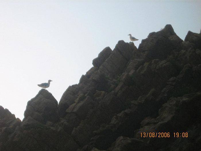 Птицы на скале.