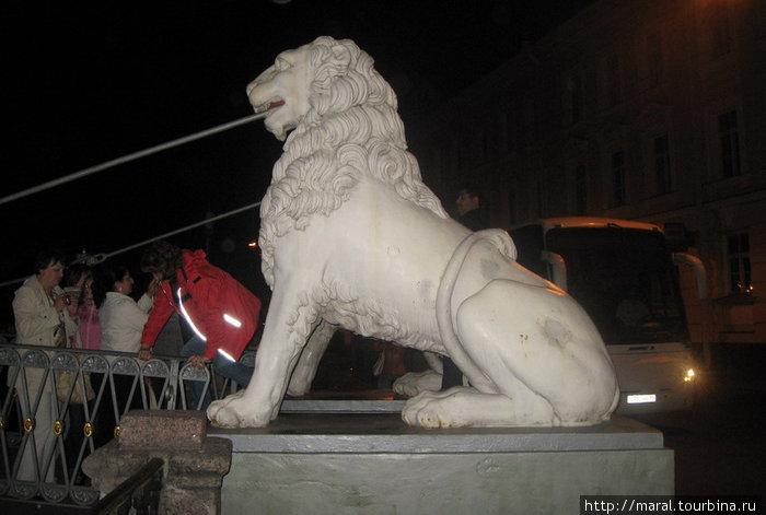 Сколько в Питере львов – бронзовых, каменных, бетонных – точно не известно, но каменные львы на висячем Львином мостике через канал Грибоедова очень известны