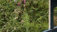 слева- заросли местной растительности, похоже что дикие.