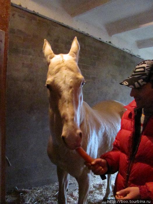 Мухтар угощает Шаара морковью