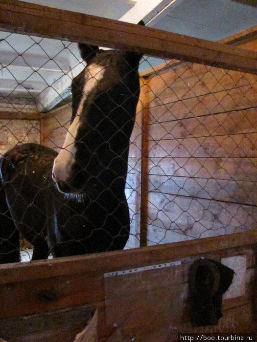 у каждой лошади свой рацион и режим