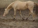 после выгула Шаара обязательно почистят от осенней грязи :)