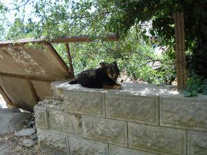 собака на стене
