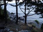 деревья вдоль по склону