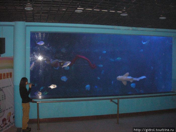 В аквариуме русалка.