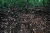 Старые лестницы кое-где изрыты носами свиней — их на Тонге очень много