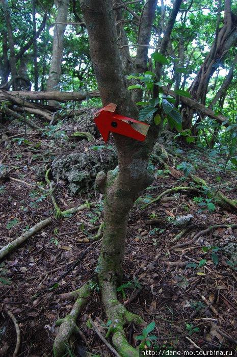 очередная стрелка, на которой, видимо, кто-то упражнялся с мачете Остров Вавау, Тонга