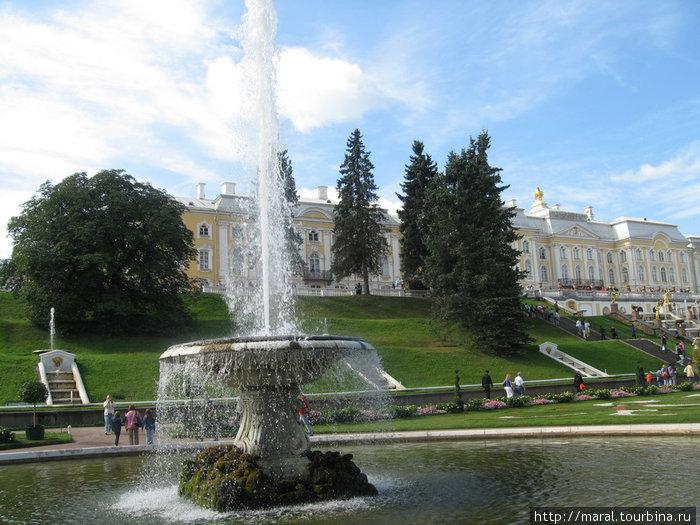 Нагулявшись по Нижнему парку, мы вернулись к Большому дворцу, построенному арх. Франческо Бартоломео (Варфоломеем) Растрелли в 1747—1752 гг. по версальской модели в стиле русского барокко