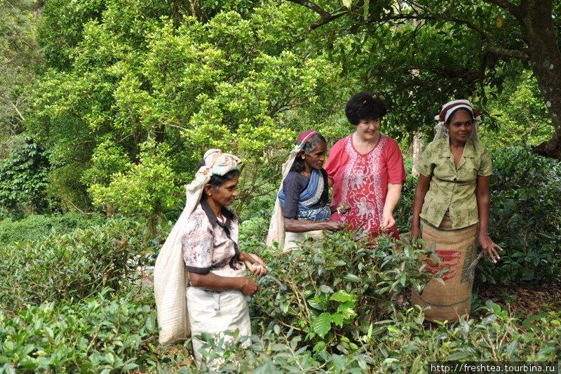 Чай собирать — непростое дело! Дневная норма — 12 кг листьев (причем только молодых, нежно-зеленых!). В этих районах острова, вокруг Канди, производят черный чай, так наз. среднегорный. Аромат — мммм!