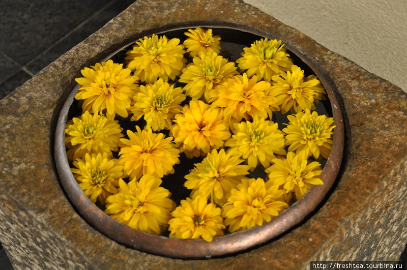 На Шри-Ланке у входа в дом или храм принято ставить вазы (или миски) с плавающими в воде цветами. Отель Jetwing Hunas Falls — не исключение.