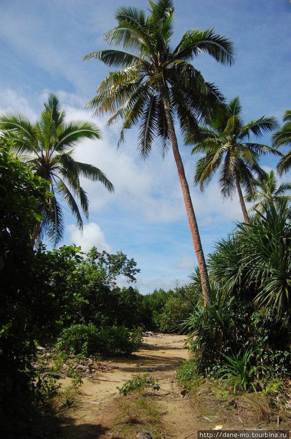 По берегу океана Остров Вавау, Тонга