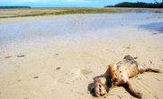 На берегах Тихого океана можно встретить не только живых крабов, но и мертвых собак...