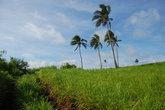 Неиспользуемые пространства заростают травой высотой в человеческий рост