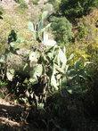 кактусы на склонах вырастают высотой по два метра