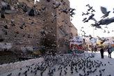 Голуби у стен крепости в Кайсери