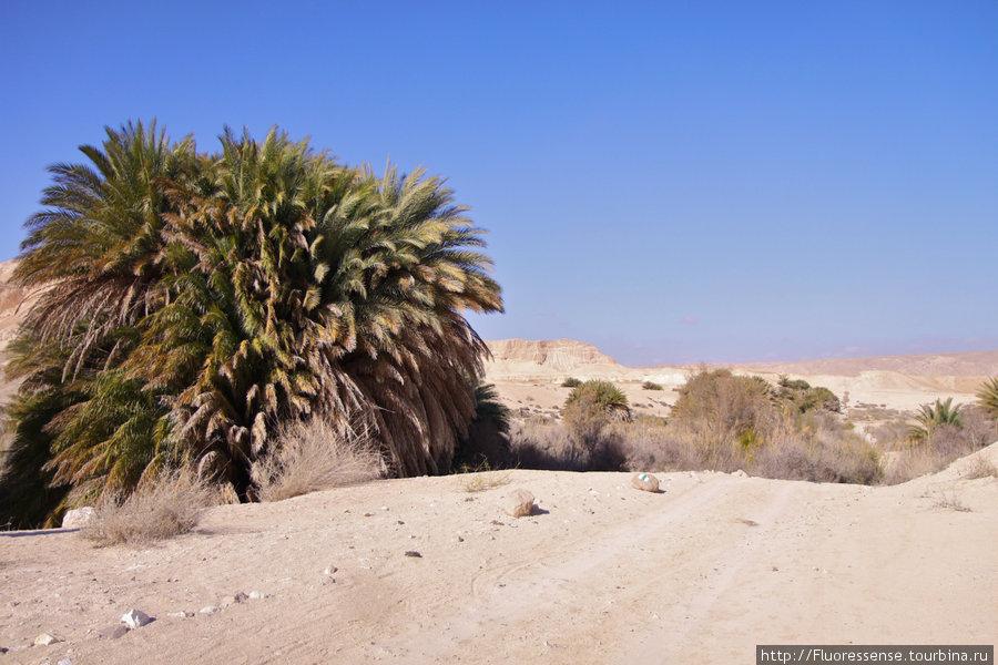 Оазис. Видимо, каким-то особым образом стекаются грунтовые воды и какой-то ручеек не пересыхает совсем — и вот результат — настоящий уголок жизни посреди мертвой пустыни.