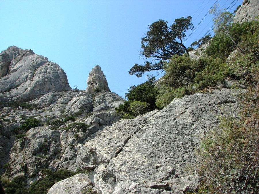 Сосны на скале