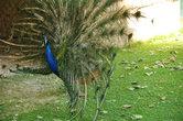 Кроме цветников и эффектных прудов, в парке есть вольер для птиц. Самые популярные персоны среди них — павлины.