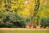 Осеннее утро в курортном парке.