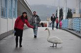 Фотосессии с участием птиц — тоже довольно привычные сценки на Колоннадном мосту.