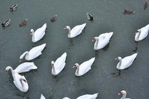 Одно из популярных занятий среди отдыхающих — кормление птиц, что приплывают к мосту в надежде на лакомство...
