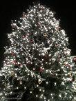 Главная рождественская елка Саксонии-Анхальт
