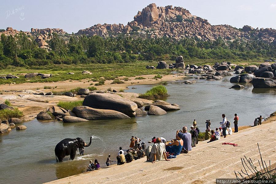 купание храмового слона