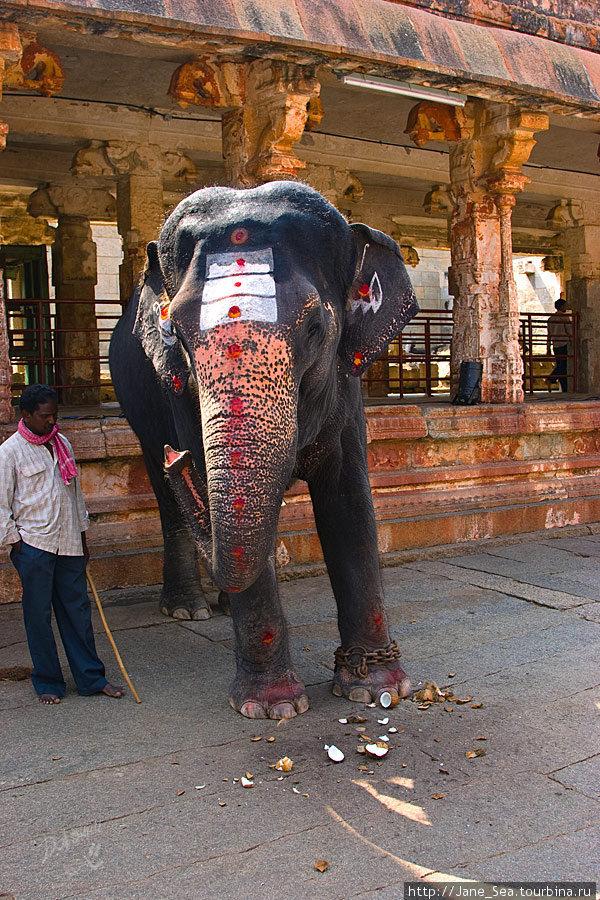 в храме Вирупакши — слоник