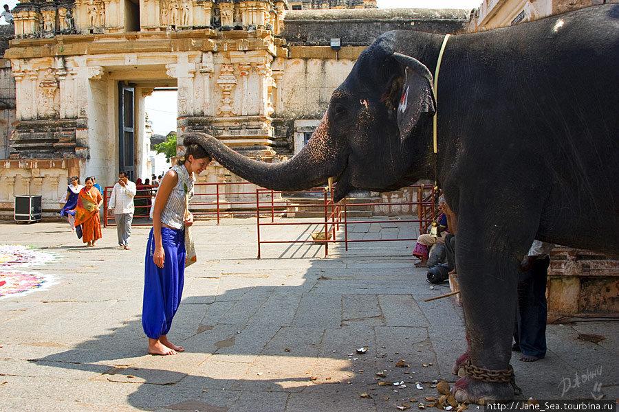 в храме Вирупакши — благоСЛОНилась