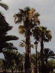 День.Пальмы.Фонарь.