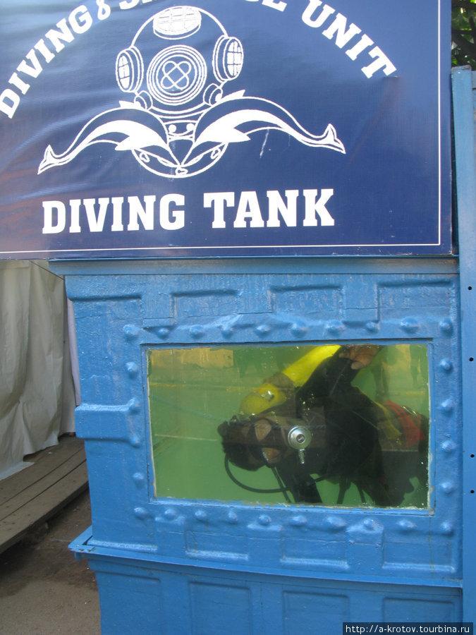 Тоже экспонат — живой подводник в большом аквариуме