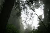 в тропических джунглях
