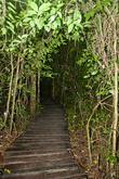 Тропинка в дождевом лесу