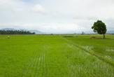 Рисовые поля по пути в Пагсаньян
