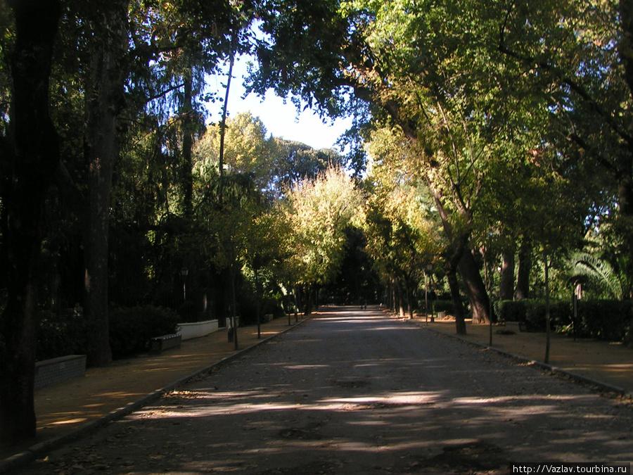 Одна из аллей парка