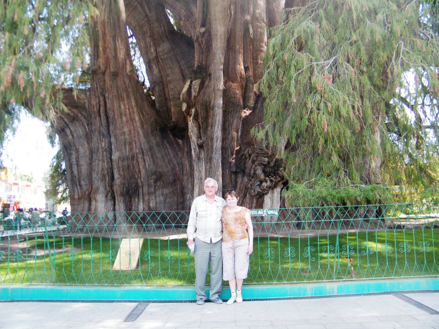 На фоне дерева рекордсмена