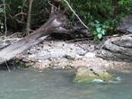 На берегу позируют крокодилы и обезьяны