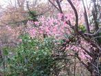 осень бересклета