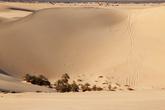 Недалеко от оазиса Сива в песках растут пальмы