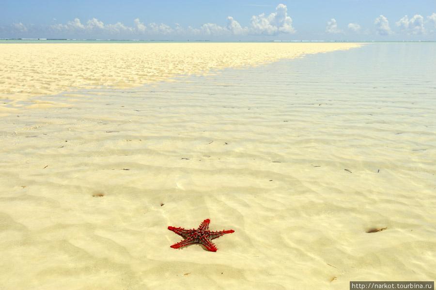 остров ордена красной звезды
