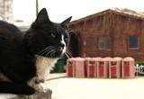 Задумчивые кошки...