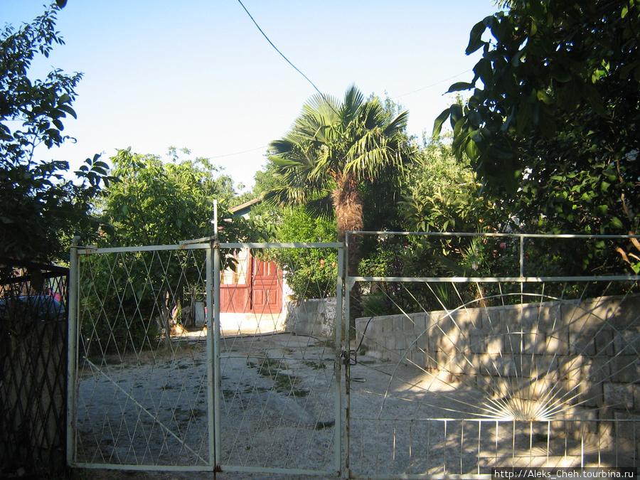 Пальмы растут даже во дворах