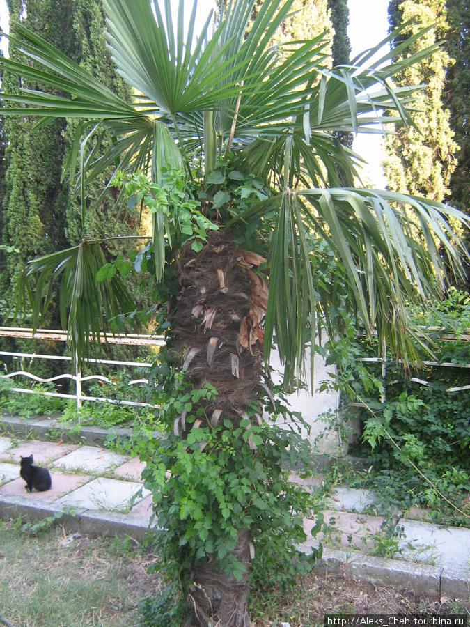 пальмы Симеиза