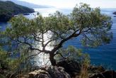 Дерево на берегу моря