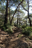 Дорожка через лес
