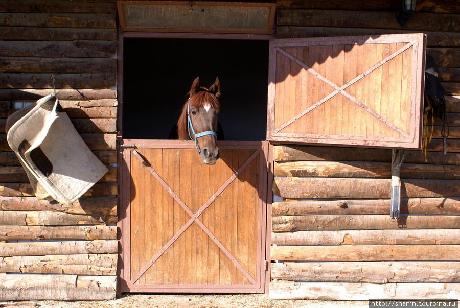 Денники для лошадей своими руками 902