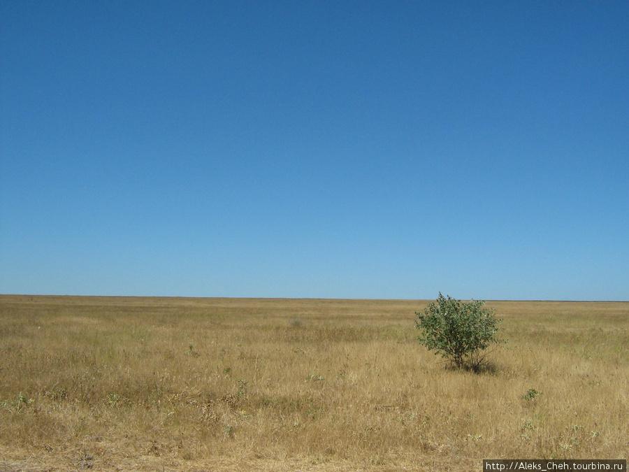 Единственное растение в радиусе 2 км.