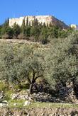 Оливковая роща и крепость